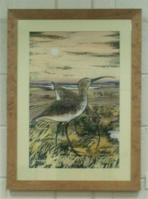 Two Curlews
