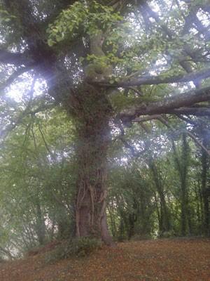 Sunlit Tree - print