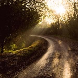 Winter's morning near Glastonbury