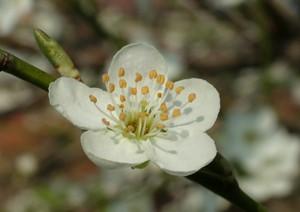 Creativity Blossom - giclee print