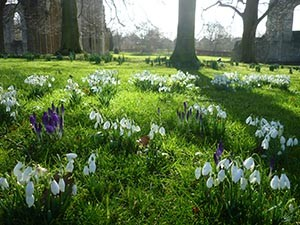 Early Spring light in Glastonbury Abbey - Giclee Print