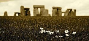 HENGE DAISIES- Stonehenge
