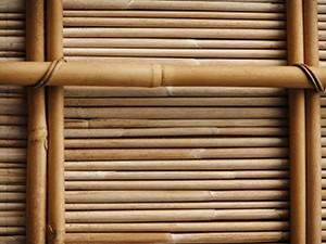 Bamboo, A4 print