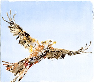 Red Kite 1- Giclee Print A4